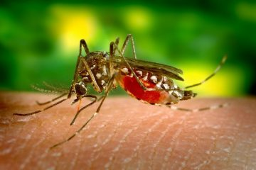 Комарец (free photos)
