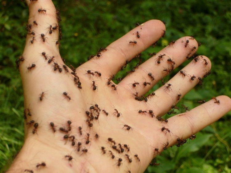 Мравки по дома? Направете природен рецепт со кој повеќе нема да ги видите