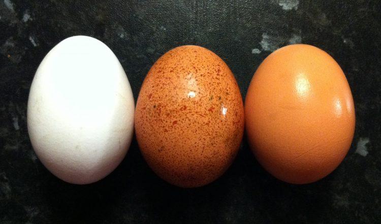 Јајцата се храна за телото и умот