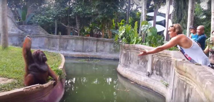 ВИДЕО: Му фрли овошје на мајмунот во Зоолошка – Еве како тој му врати