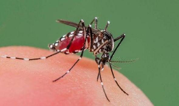 Спасете се од чешањето – Со јадење против здодевните комарци