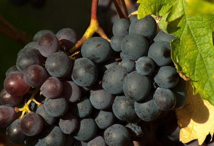 Еве како да направите чудесен сируп од грозје