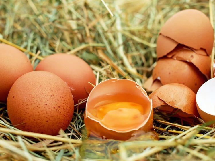 ФОТО: Купила јајца од познат супермаркет – од едно излегло пиле
