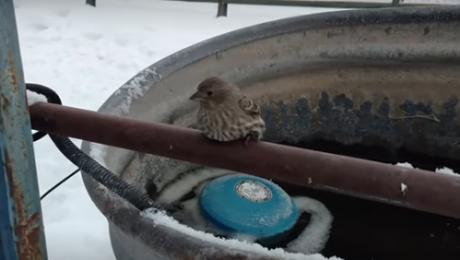 ВИДЕО: Врапче се залепи за ограда од студ – она што следува ќе ве трогне