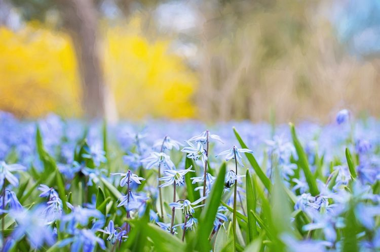 Доаѓа вистинска пролет – УХМР најави што не чека