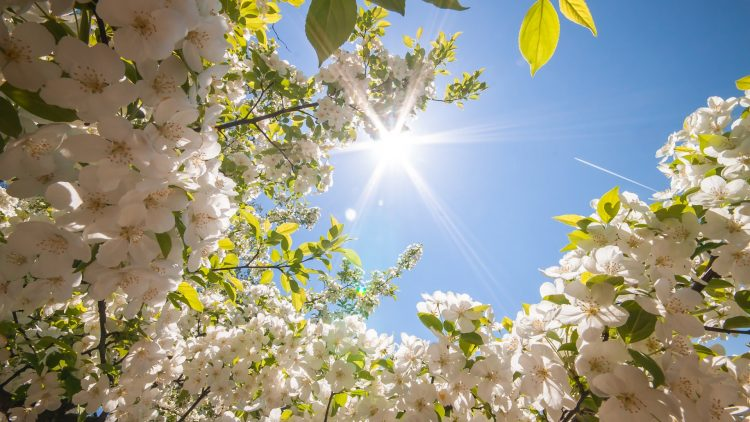 ВРЕМЕНСКА: Денеска вистинска пролет
