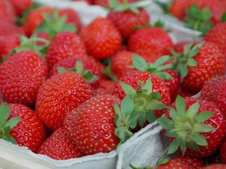 Вака правилно се чуваат јагоди – Има едно важно правило
