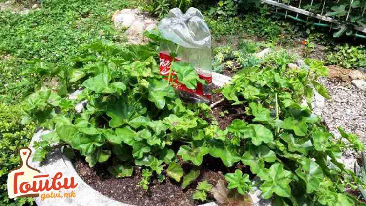 Ставете го ова на цвеќињата и нема да се исушат додека сте на одмор – штити и од инсекти