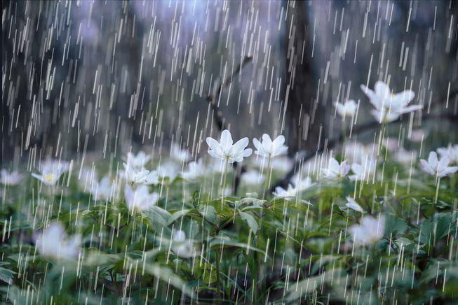 Следи нов влажен бран и многу дожд – временска прогноза
