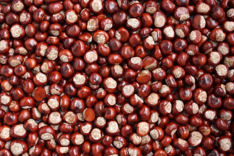 Симбол на есента, здрави и вкусни: Вака правилно се варат костени