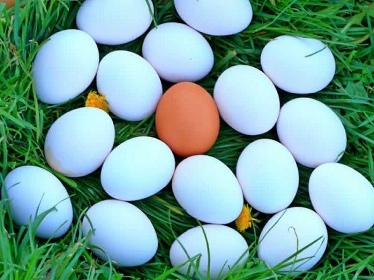 Еве што значат ознаките S, A и B на кутиите за јајца