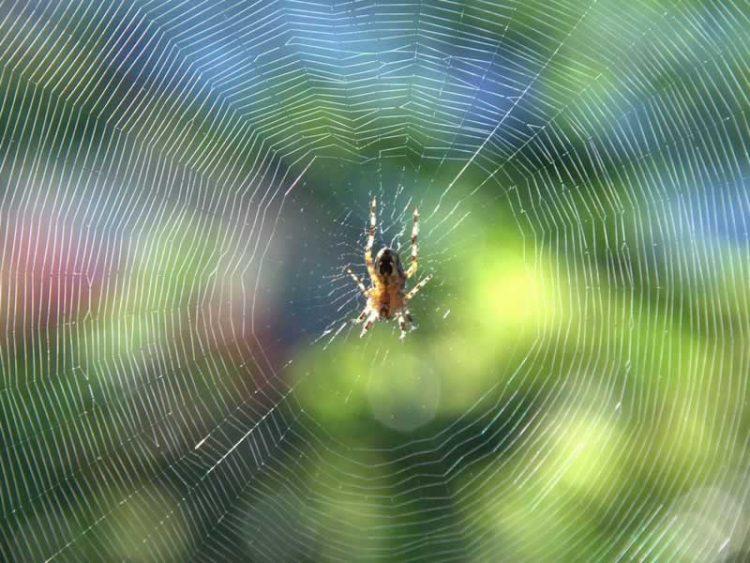 Едноставен трик: Еве како да се решите од пајаците во куќата