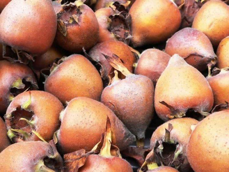 Ликер од мушмули: Пијалак кој го чисти црниот дроб, го снижува холестеролот и го регулира варењето