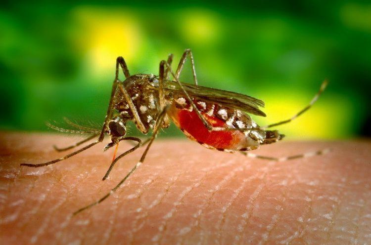 Градот прскаше против комарци, а овие инсекти бегаат од 3 билки