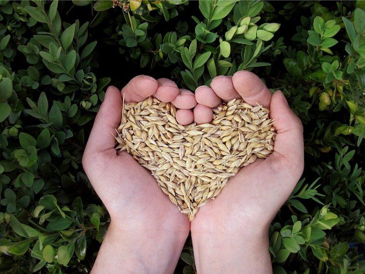 Со пет вкусни намирници до здраво срце