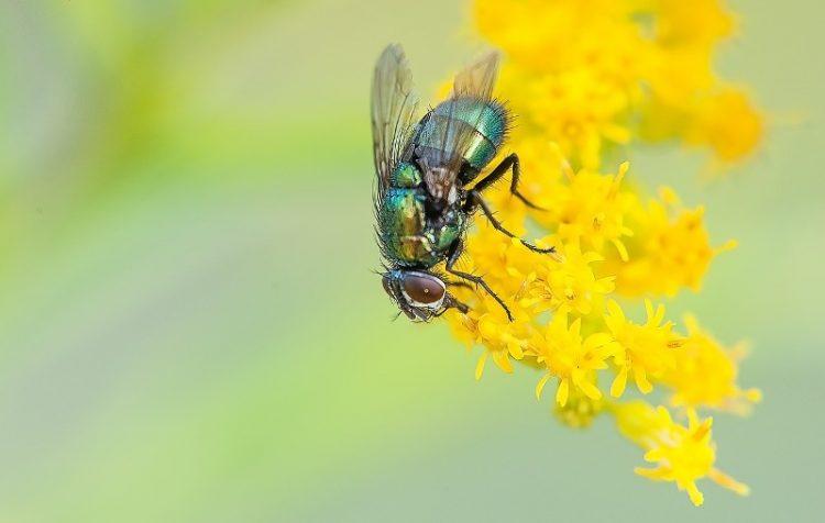 Едноставен трик со кој ќе ги избркате мувите од вашиот двор и балкон