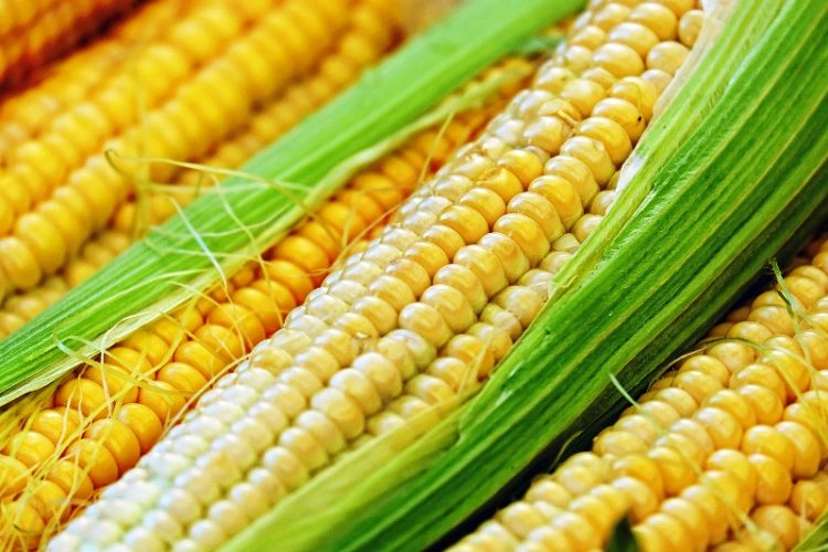 ВИДЕО: Дуплирани приносите, а еве какви видови на пченка постојат