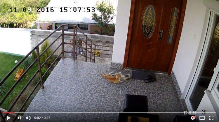 Погледнете ја реакцијата на ова маче за време на вчерашниот земјотрес во Скопје (ВИДЕО)
