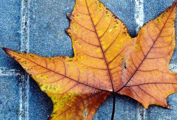 Спремете се за ајвар, зимница и туршија: Денеска почнува есента