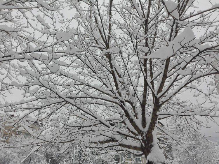 Временска за цел февруари – Пресврт со температурите