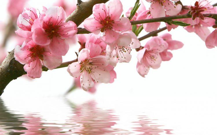 Супер вести за времето – денеска пролет