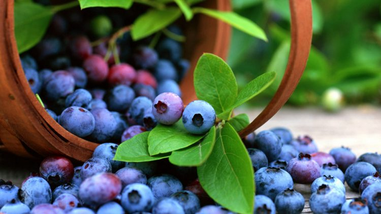 Ова овошје е рудник на здравје: Го храни мозокот и спречува тешки болести