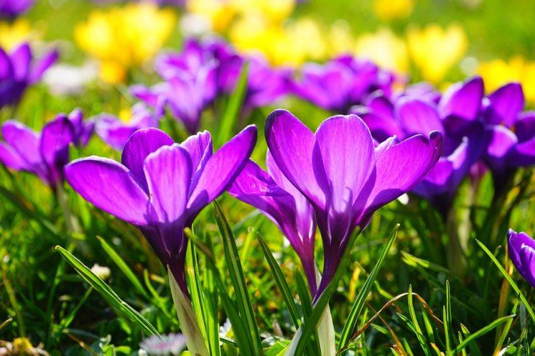 Наутро температурите под нула – потоа вистинска пролет