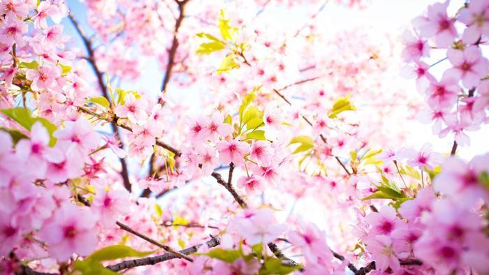 Одлични вести за првиот пролетен ден