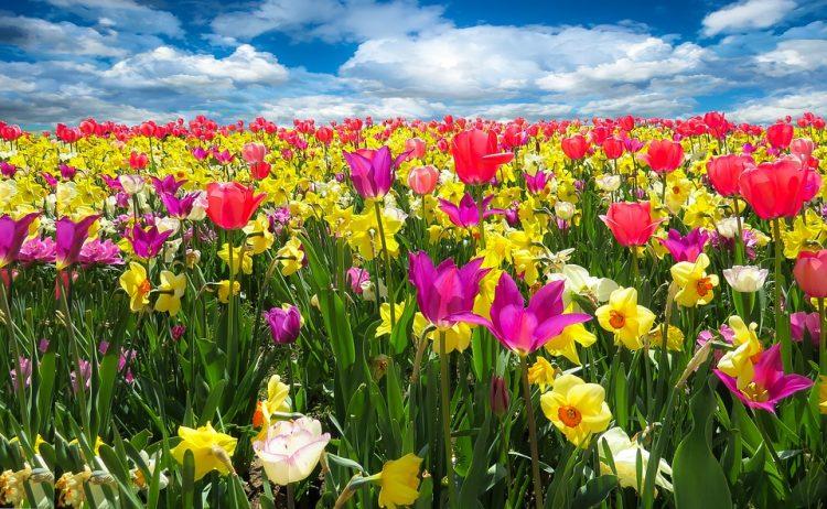 Утре почнува пролетта: Еве какво ќе биде времето