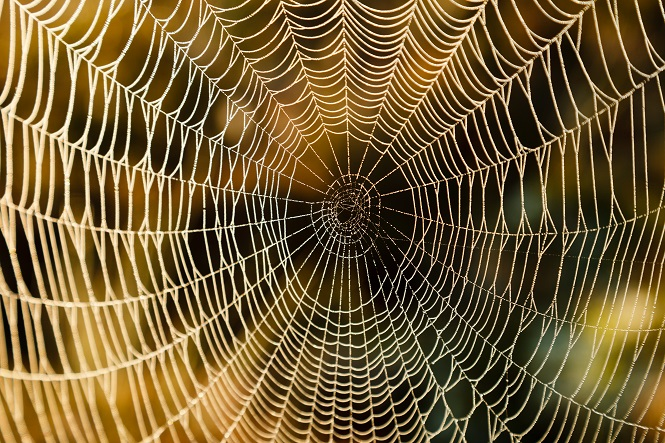 Wet spider web on an early morning at the Torronsuo Swamp in Finland. Sunlight hits the water drops on the web.