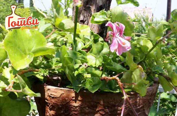 Инсектите нема да ги уништуваат цвеќињата – Супер трик за прекрасна тераса и двор