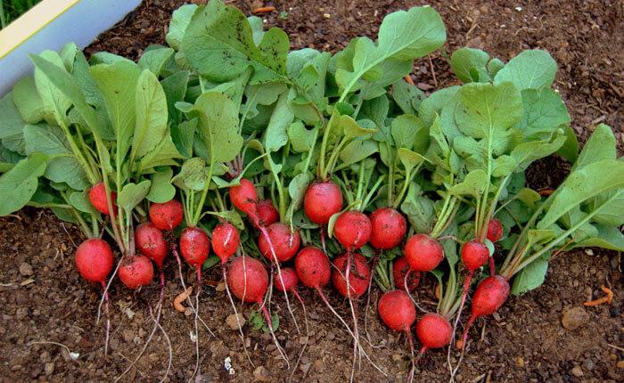 ЧИНИ САМО 10 ДЕНАРИ: Најевтиниот зеленчук на пазарите е и најздравиот