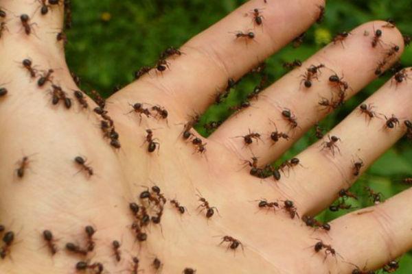 Измеша две евтини состојки – засекогаш се реши од мравките во домот