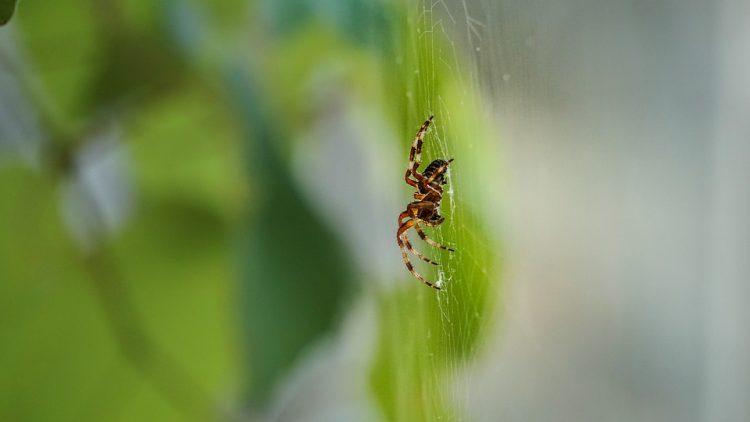 Нема веќе да видите пајак на ќошевите дома – Евтини и брзи трикови