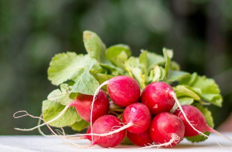 Ротквици – Богати фолна киселина, моќни во борба со болести