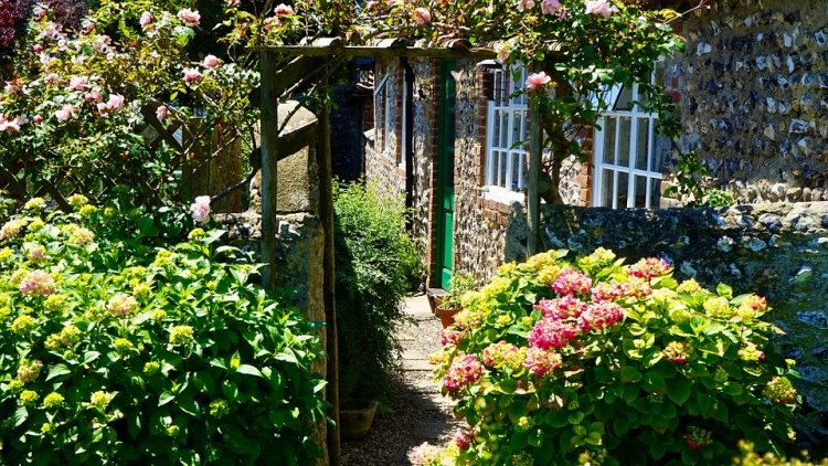 Ќе имате најубав двор или тераса – Трик со кој цвеќињата нема да престанат да цветаат